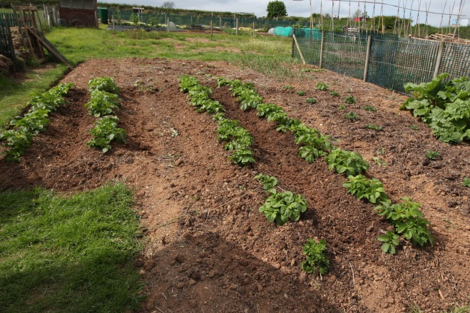Allotment-3