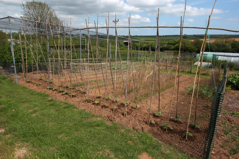Allotment-4