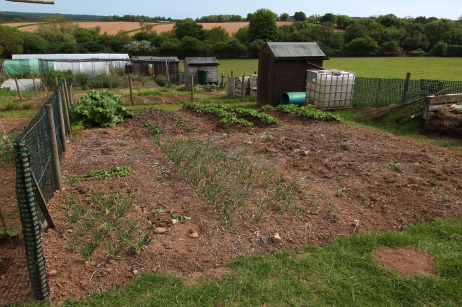 Allotment-5