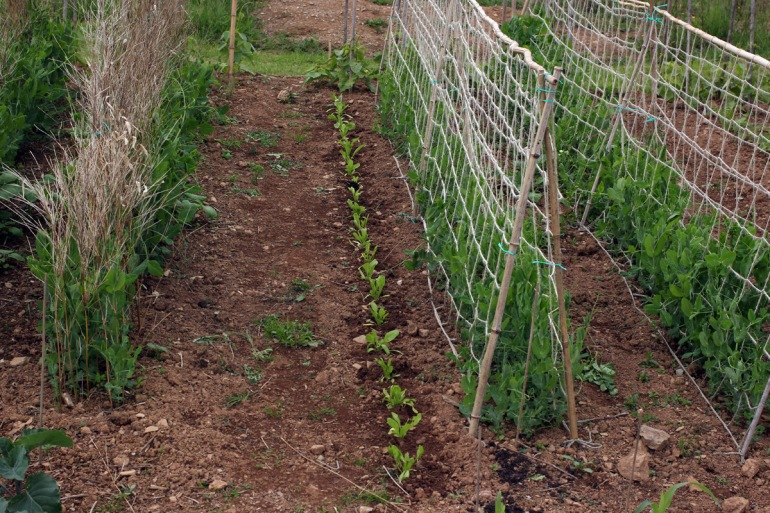 Allotment-6