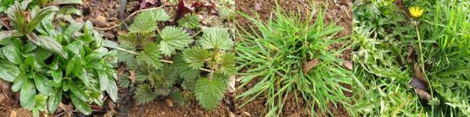 weeds-2