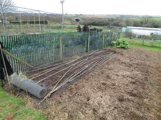 Allotment-11