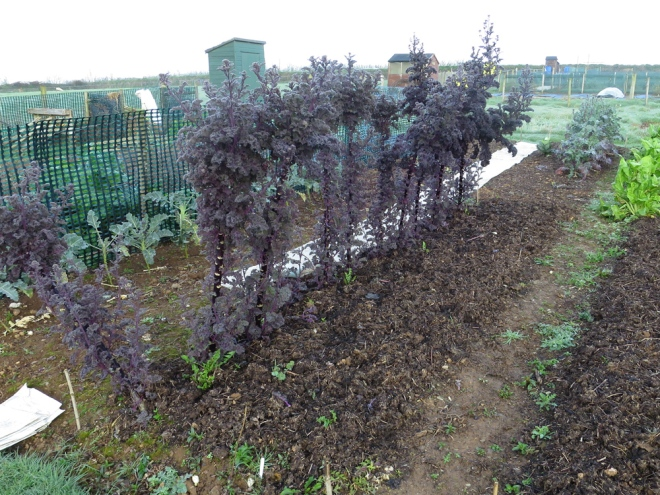 Allotment-12