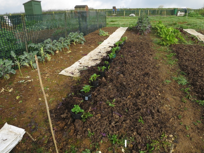 Allotment-13