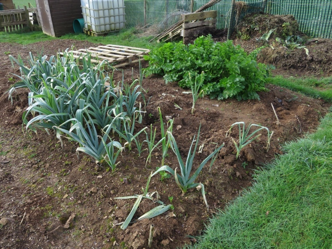 Allotment-17