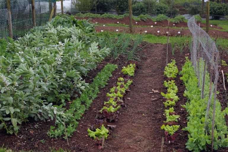 Allotment-29