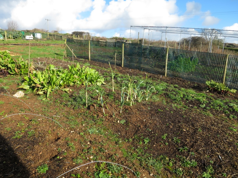 Allotment-39