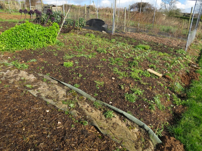 Allotment-40
