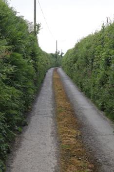 Lane-2