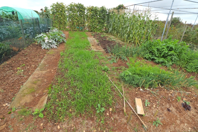 Allotment-87