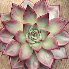 cactus-11
