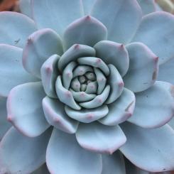 cactus-20