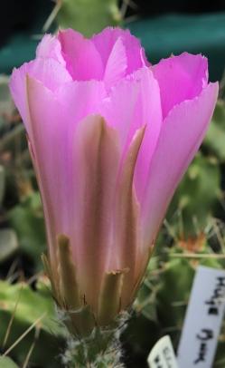 cactus-22