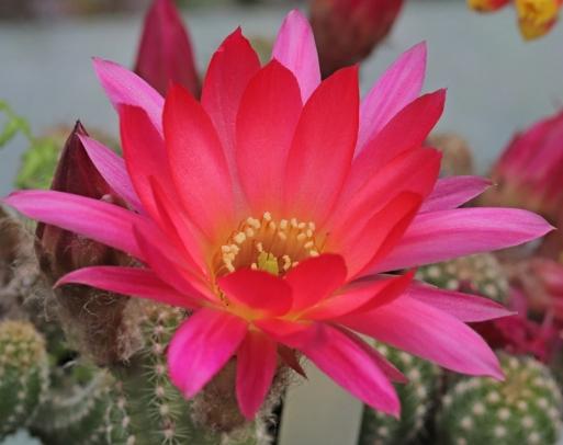 cactus-23