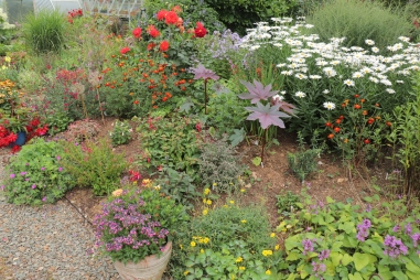 Ricinus and Tagetes went in where a drift of Helenium died.