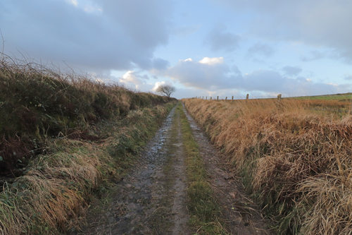 Right hand bank faces south and is grassy, left hand bank faces north and is mossy with ferns.